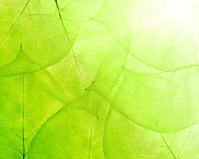 Obraz zielone tło z cienkich liści