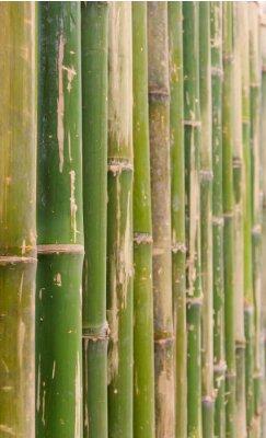 Obraz zielony bambus ogrodzenia wzór tekstury tła