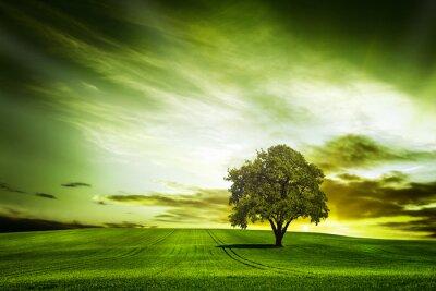 Obraz zielony charakter