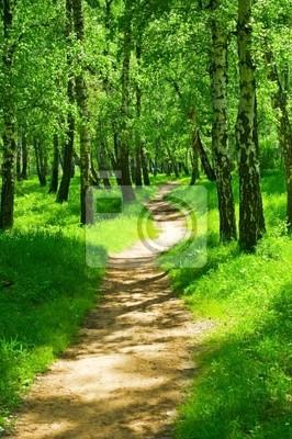 Obraz zielony las