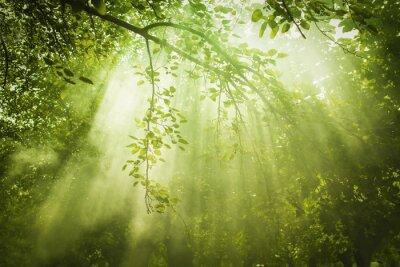 Obraz Zielony Las z Sunbeam