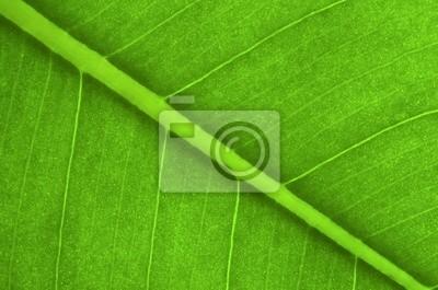 zielony liść w tle