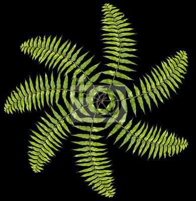 Zielony paproć wzór, ciekawe tło.