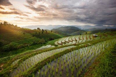 Obraz Zielony Taras Rice Field w Chiang Mai w Tajlandii - Vibrant kolor