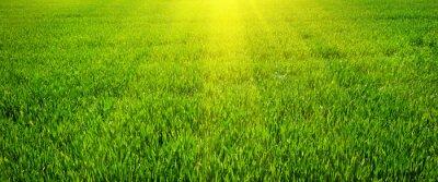 Obraz Zielony trawnik w tle