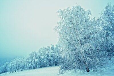 Obraz Zimowe drzewa