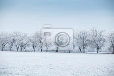 Zimowy Krajobraz Wiersz Drzew W Mróz Na Polu Zimą Obrazy Redro