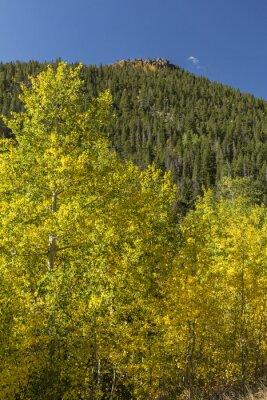 Złote Aspeny poniżej Lumpy Ridge