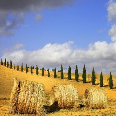 Obraz złote wzgórza Toskanii. Włoskie krajobrazy