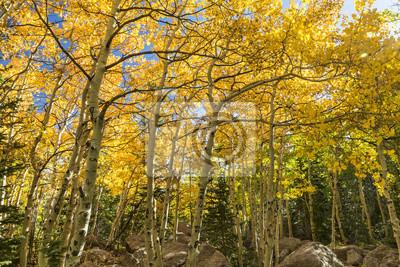 Złoty Aspen Grove przy Szlaku Wąwozu Lodowca