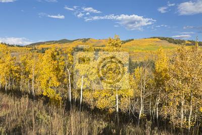 Złoty Stok Aspen