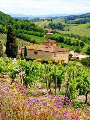 Obraz Zobacz przez winnice z domu z kamienia, Toskania, Włochy