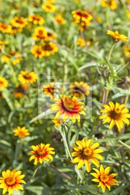 Żółte kwiaty, płytkiej głębi ostrości.