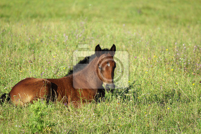 źrebak koń w letnie pastwiska