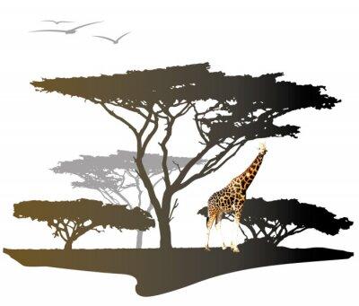 Obraz Żyrafa z sylwetką drzewa