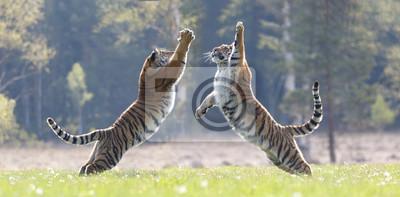 Plakat 2 Tiger skoczył