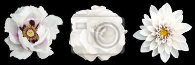 Plakat 3 surrealistyczne egzotyczne wysokiej jakości białe kwiaty makro odizolowane na czarno. Obiektów kartkę z życzeniami na rocznicę, ślub, matki i dzień projektowania kobiet