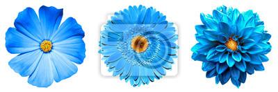 Plakat 3 surrealistyczne egzotyczne wysokiej jakości niebieskie kwiaty makro na białym tle. Obiektów kartkę z życzeniami na rocznicę, ślub, matki i dzień projektowania kobiet