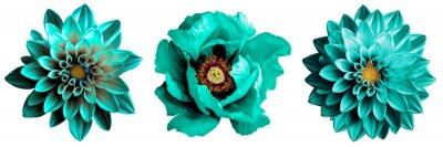 Plakat 3 surrealistyczne egzotyczne wysokiej jakości turkusowe kwiaty makro na białym tle. Obiektów kartkę z życzeniami na rocznicę, ślub, matki i dzień projektowania kobiet