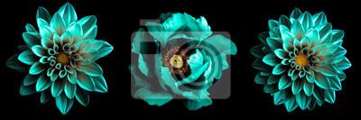 Plakat 3 surrealistyczne egzotyczne wysokiej jakości turkusowe kwiaty makro na czarnym tle. Obiektów kartkę z życzeniami na rocznicę, ślub, matki i dzień projektowania kobiet