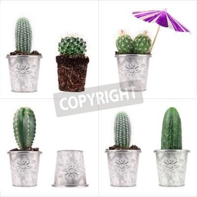 4 Kaktus Pojęcia Zielone Kaktusy W Metalowe Doniczki Na Białym Plakaty Redro