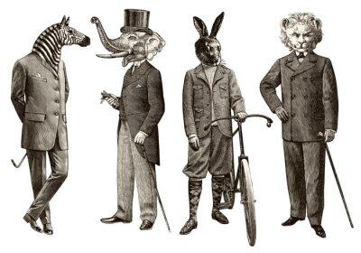 Plakat 4 zwierzęta mężczyzn