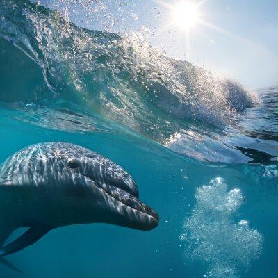 Plakat A dolphin closeup portrait under surfing splashing wave in sunrays underwater