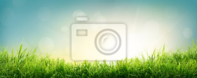 Plakat A natural spring garden background of fresh green grass with a bright blue sky and sun.