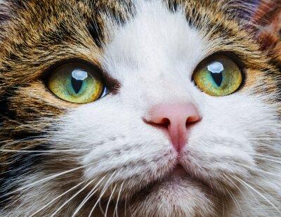 Plakat A oczy kota bliska