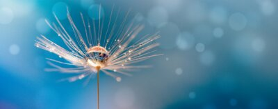 Plakat Abstract blurred nature background dandelion seeds parachute. Abstract nature bokeh pattern