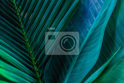 Plakat abstract green leaf texture, nature background, tropical leaf
