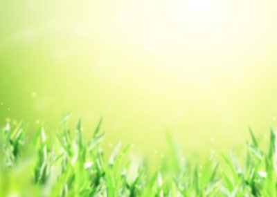 Abstract nature background with green grass