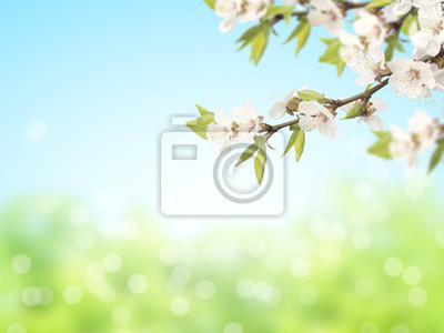 Abstract sunny blur spring background with flowers of cherry