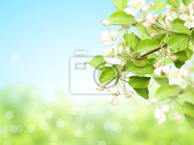 Abstrakcjonistyczny pogodny plamy wiosny tło z kwiatami jabłko