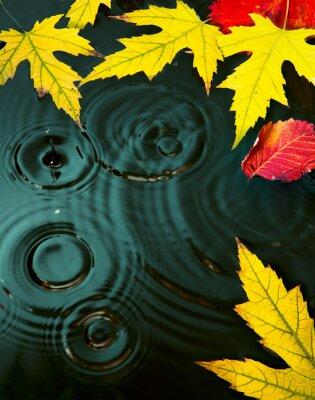 Plakat abstrakcyjny deszcz jesień żółte liście