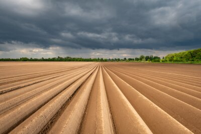 Plakat Agricultural field with even rows in the spring