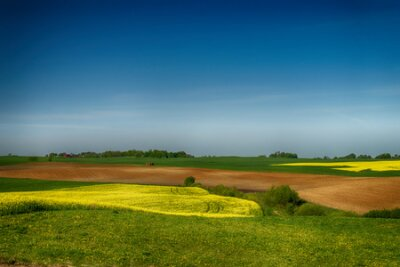 Plakat Agricultural landscape with rolling hills, ploughed farm field, meadow and a trees in a field