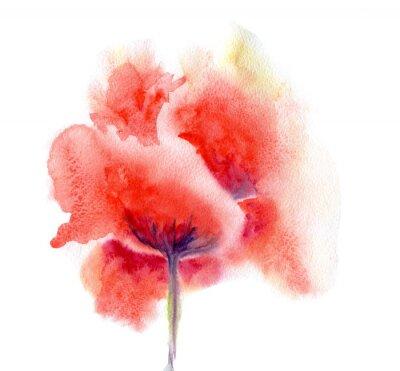 Plakat Akwarela kwiat maku
