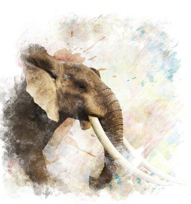 Plakat Akwarela Obraz Słoń