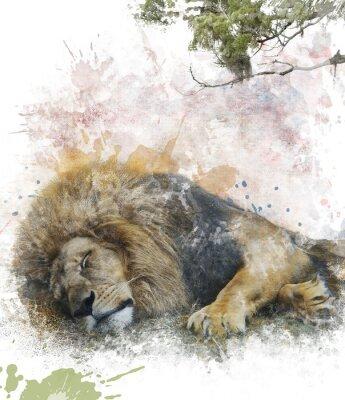 Plakat Akwarela Obraz Śpiąca Lion