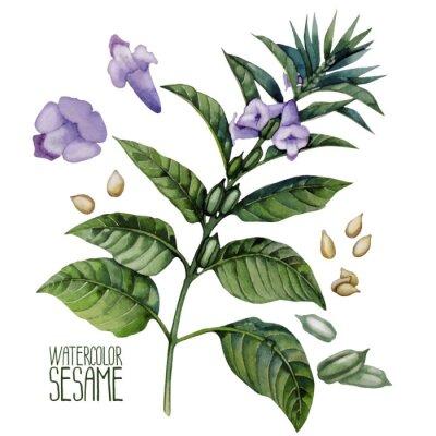Plakat Akwarela sezamu kwiaty