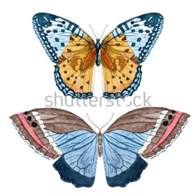 Plakat akwarela zestaw motyli, białe tło