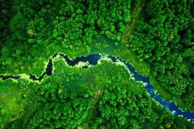 Plakat Amazing blooming algae on green river, aerial view