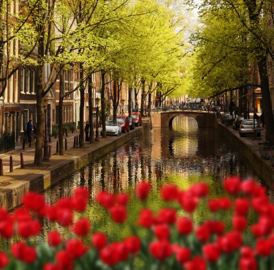 Plakat Amsterdam z zielonym kanałem w centrum miasta, w Holandii