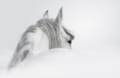 Plakat Andaluzyjski koń we mgle
