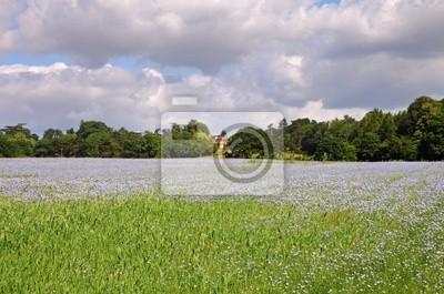 Angielski krajobrazu wiejskiego z pola lnu