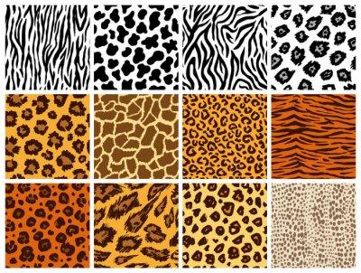 Plakat Animal seamless pattern set. Mammals Fur. Collection of print skins. Predators Camouflage. Cheetah Giraffe Zebra Leopard Holstein cattle Snake Jaguar. Printable Background. Vector illustration.