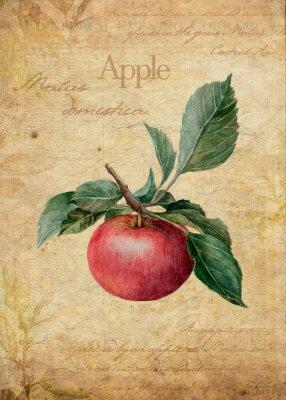 Plakat Apple vintage botanical illustration