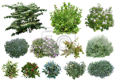 Plakat Arbustes