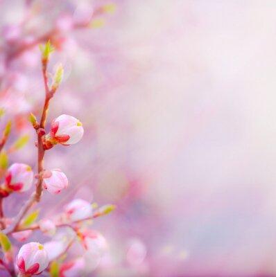 Plakat art Piękna wiosna kwitnących drzew na tle nieba